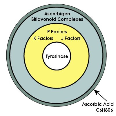 Ascorbic Acid vs Vitamin C