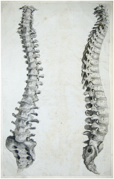 A Brief and Selected History of Insurance and Chiropractic